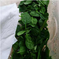 How to Keep Baby Spinach Fresh for Longer